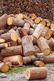 Firewood against of woodpile Royalty Free Stock Image