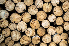 Firewood. Is any wooden material that is gathered and used for fuel. Generally,  is not highly processed and is in some sort of recognizable log or branch form stock images