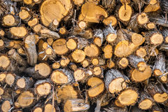 Firewood background texture Stock Photography