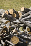 Firewood beech. View of a pile of firewood beech after cutting Royalty Free Stock Photography