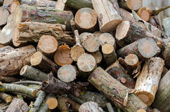 Firewood. Big pile of conifers firewood stock photography