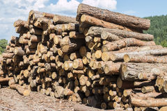 Firewood. Big wall of stacked wood logs showing natural discoloration Royalty Free Stock Photo