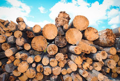 Firewood and blue sky Royalty Free Stock Image