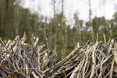 Firewood branches forest Stock Photo