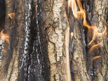 Firewood burning Royalty Free Stock Images