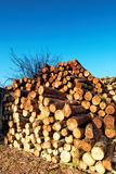 Firewood combined in a woodpile. Stock Images
