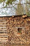 firewood cru Madeira combustível naughty imagem de stock