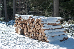 Firewood. Cut trees for combustion under snow in the woods royalty free stock images