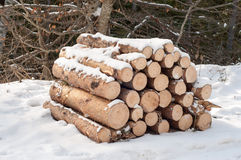 Firewood. Cut trees for combustion under snow in the woods stock photos