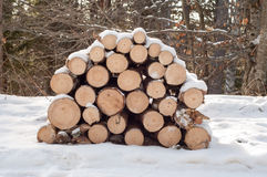 Firewood. Cut trees for combustion under snow in the woods stock photography