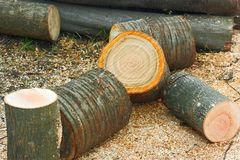 Firewood cutting logs Royalty Free Stock Photo