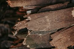 Firewood, for fire, stacked in a flat pile. wall firewood royalty free stock images