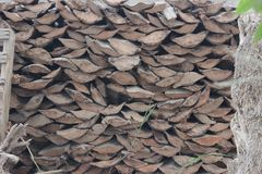 Firewood. S taken from palm trees Stock Photo