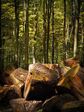 Firewood in a forest Stock Photo