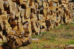 Firewood in the forest. Close up of a stack of firewood, wood logs Stock Images