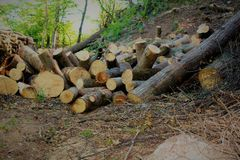 Firewood in the forest Royalty Free Stock Images