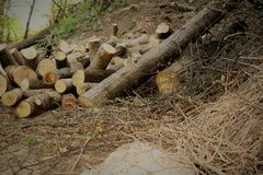 Firewood in the forest Royalty Free Stock Photography