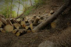 Firewood in the forest Royalty Free Stock Photo