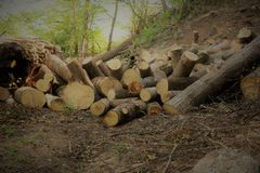 Firewood in the forest Royalty Free Stock Photos