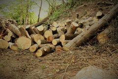Firewood in the forest Stock Photography