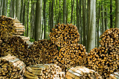 Firewood in forest Stock Images