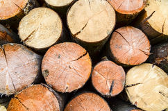 Firewood- freshly sawn timber texture Royalty Free Stock Images