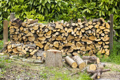 Firewood in the garden Stock Images