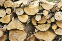 Firewood in the garden Royalty Free Stock Images