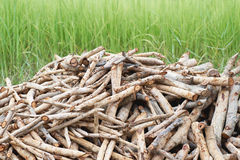 Firewood on grass Royalty Free Stock Image