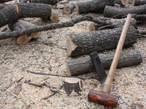 Firewood and hand splitting tools. Fresh cut and fallen tree for firewood with mallet and wedge Royalty Free Stock Photos