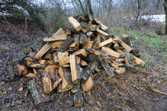 Firewood heap in forest Stock Photos