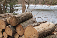 Firewood by melting lake Stock Image