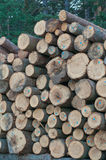 Firewood. Large felled trees stacked in a pile in the woods royalty free stock photography