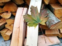 Firewood. Leaf fell on the firewood Royalty Free Stock Image