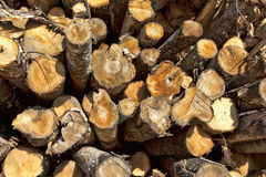 Firewood log ends Royalty Free Stock Image