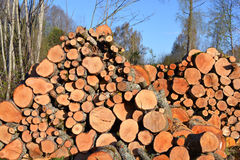 Firewood log stack in spring Stock Photo