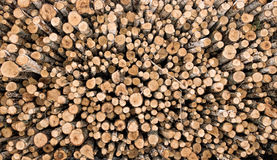 Firewood logs. Pile of cut firewood, different sizes of birch logs Stock Photos