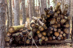 Firewood. Logs lie in the forest stock photography