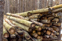 Firewood. Logs lie in the forest royalty free stock images