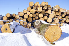 Firewood  stack  on winter snow Royalty Free Stock Photography