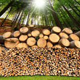 Firewood Logs - Tree Trunks - Forest Royalty Free Stock Photo