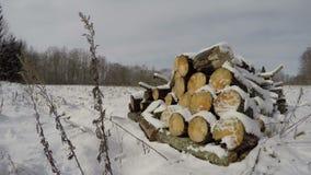 Firewood logs on winter snowy field near forest, time lapse 4K. Firewood logs on winter snowy field near forest and clouds motion, time lapse 4K stock footage