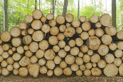 Firewood. Lumber as firewood in a forest Stock Photography