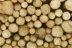 Firewood. Lumber as firewood in a forest Royalty Free Stock Photos