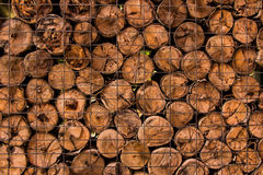 Firewood. Many Firewood in Thai Nation Park Royalty Free Stock Photo