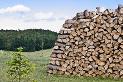 Firewood in Nature - Wood Royalty Free Stock Photography