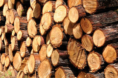 Firewood. Stock Images