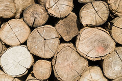 Firewood pile Royalty Free Stock Images