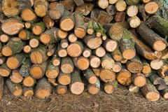 Firewood pile Stock Photography