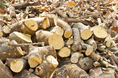 Firewood. Pile of branches are cut for firewood Royalty Free Stock Image